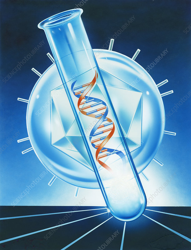 Viral DNA research