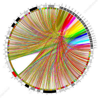 Circular genome map