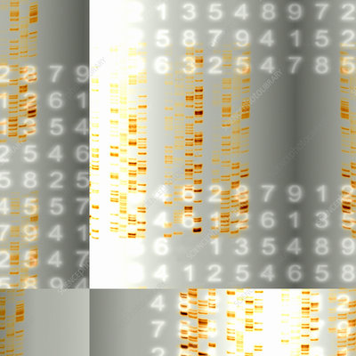 DNA autoradiograms and numbers