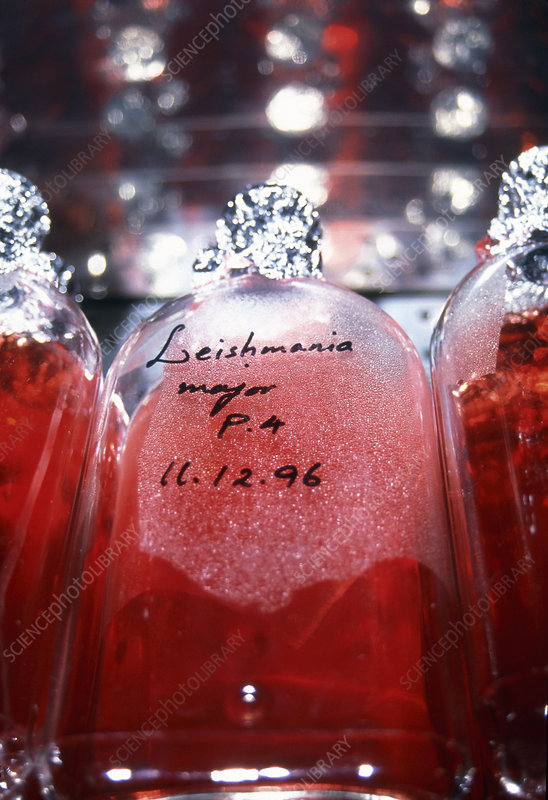 Leishmania culture bottles for vaccine production