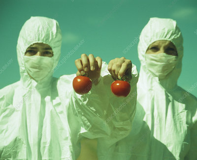 Scientists holding GM tomatoes