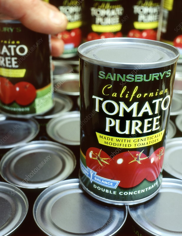 Genetically modified tomato puree
