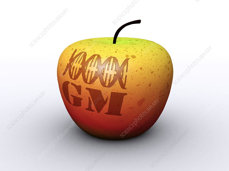 Genetically modified apple, artwork