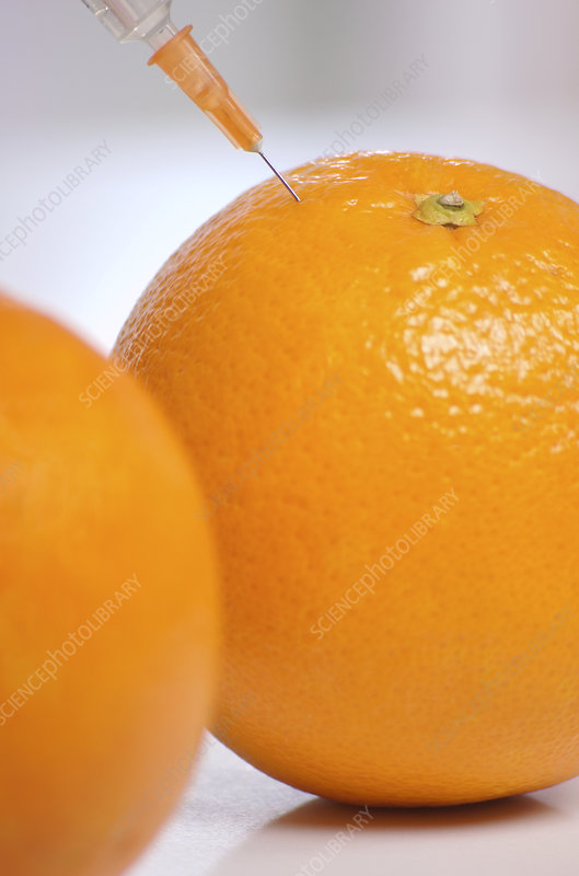 Genetic modification of oranges