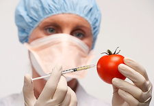 Genetically engineered tomato
