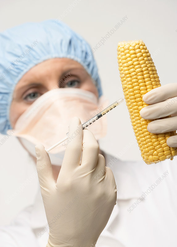 Genetically engineered sweetcorn