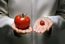 Genetic modification of tomatoes