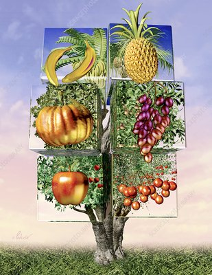 Genetically modified food, artwork