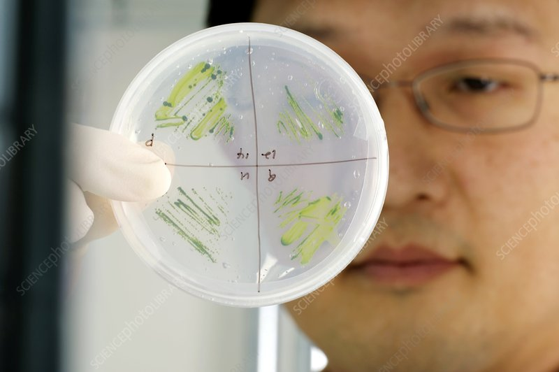 Algae research