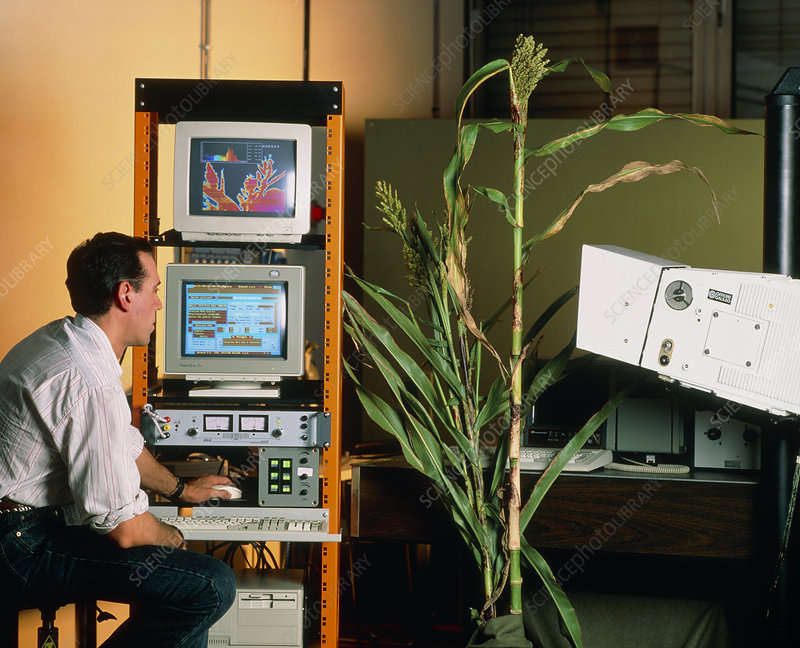 Infrared analysis of sweet sorghum plants