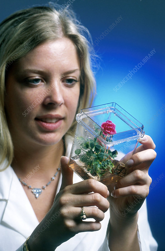 Biologist inspecting biotech plant