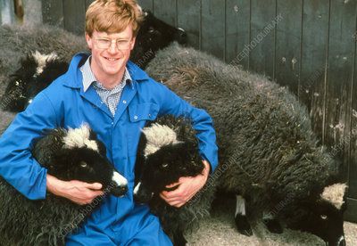 Veterinary scientist with genetically-cloned sheep