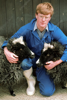 Scientist with genetically-cloned sheep