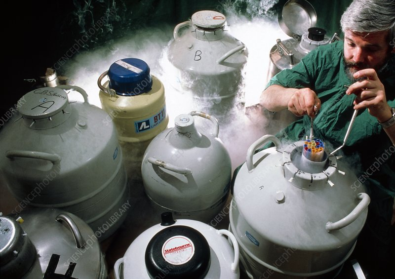 Cow embryos being stored in liquid nitrogen