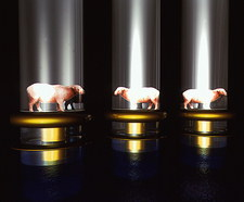 Computer artwork of cloned sheep in test tubes