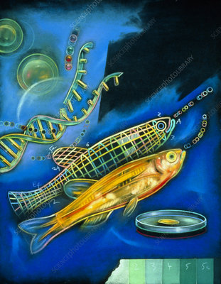 Abstract artwork of genetically-engineered fish