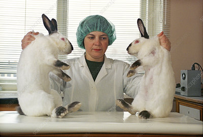 Cloned rabbits