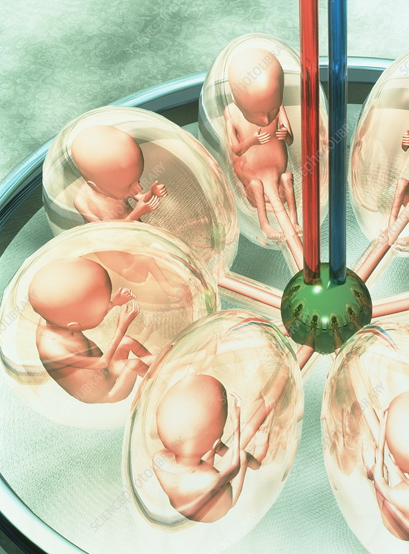 Cloning and Embryonic Stem Cells