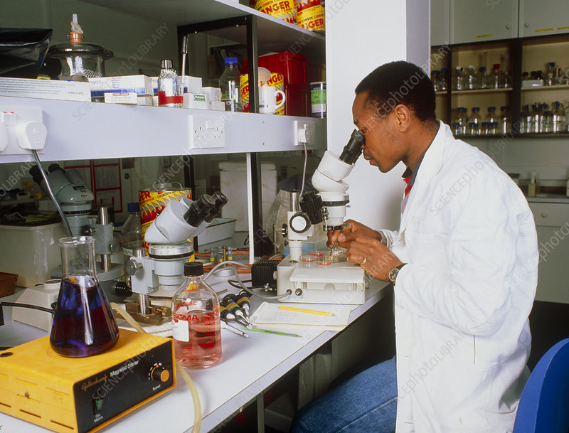 Scientist studying parasitesunder a microscope