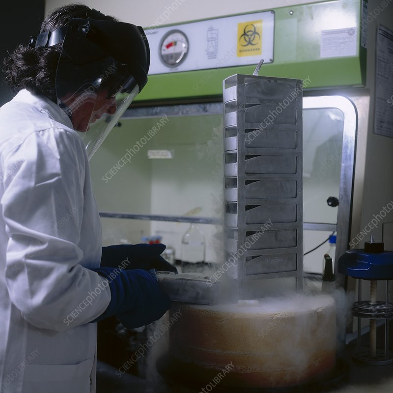 Tissue culture stored in liquid nitrogen