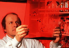 Scientist holding a cell culture autoradiograph