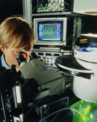 Biologist performing electrophysiology experiment