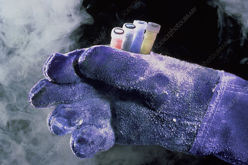 Gloved hand with sample tubes from liquid nitrogen