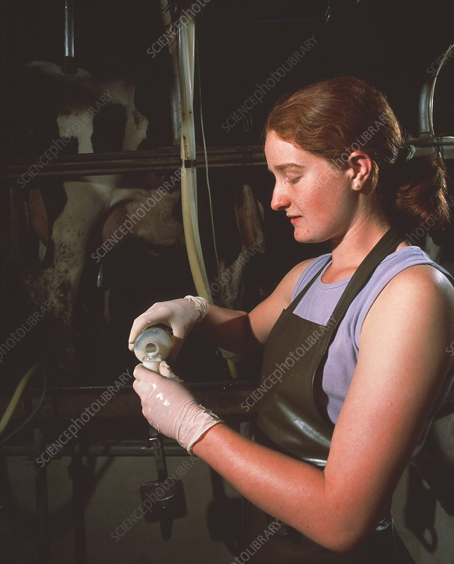 Researcher collecting milk sample
