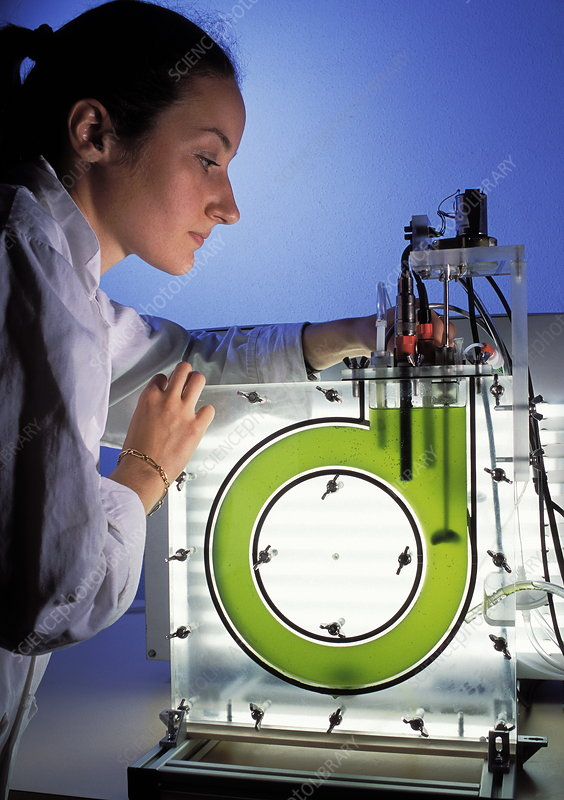 Algal bioreactor research