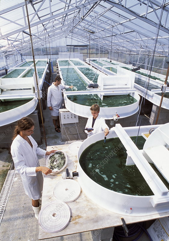 Algal research