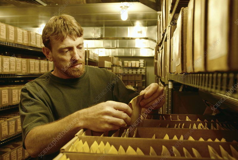 Technician checking seed samples