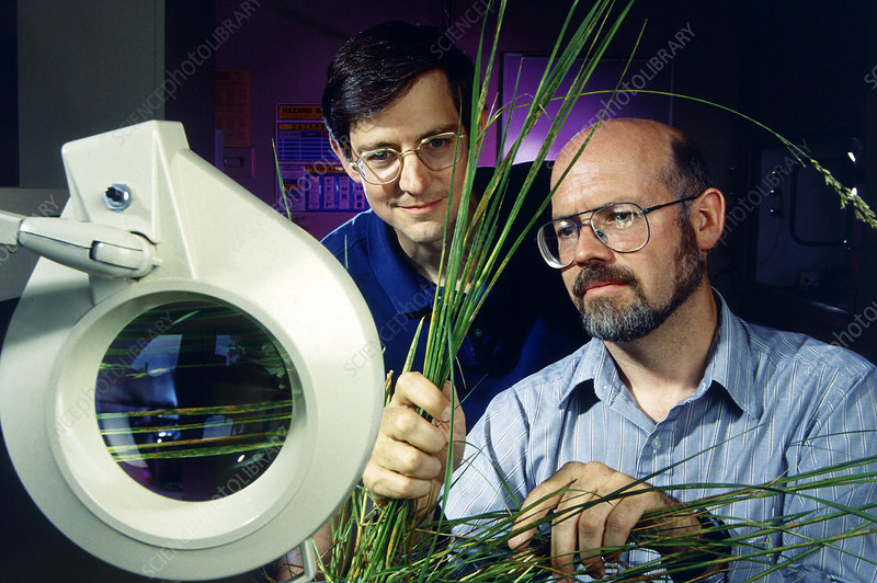 Plant pathologists