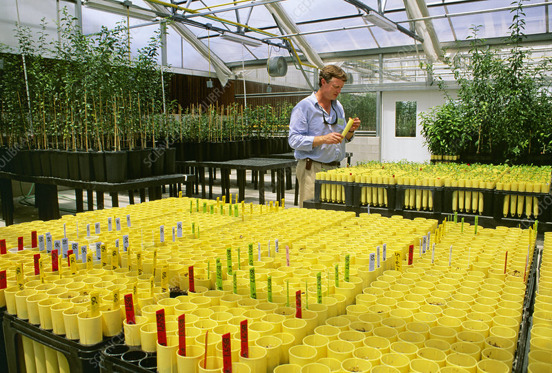 Hybrid citrus plant research