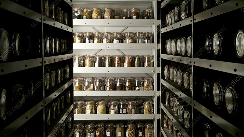 Seed bank cold storage vault