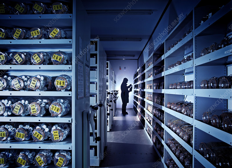 Seed bank cold storage vault - Stock Image - G350/0852 - Science Photo  Library