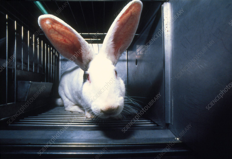 Caged laboratory rabbit awaiting experimentation
