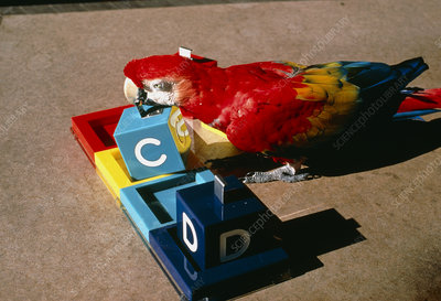 View of a macaw differentiating coloured blocks