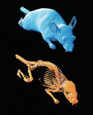 3D CT scans of obese laboratory mouse