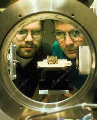 Researchers watch mouse in CT scanner