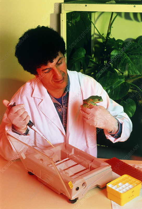 Biologist with tree frog (Phyllomedusa bicolor)