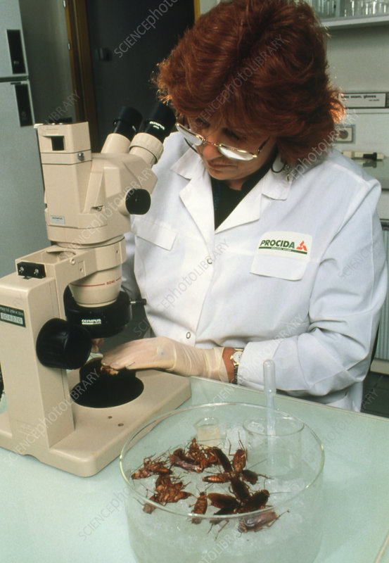Biologist placing cockroach under microscope