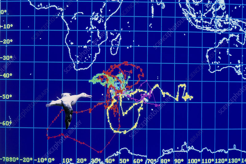 Computer monitor view of albatross movements