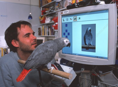 Parrot playing with computer