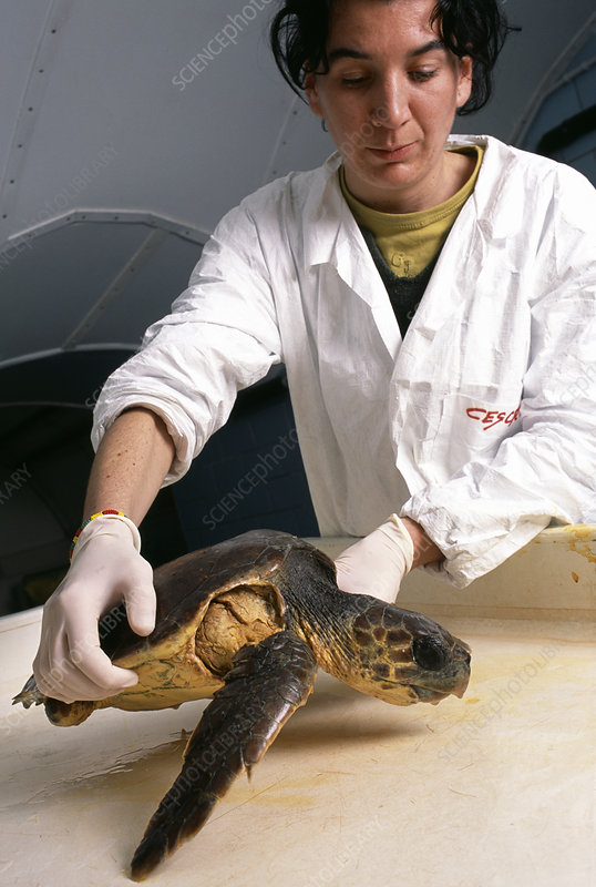Researcher with turtle