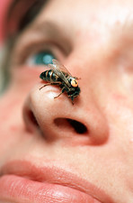 Bee on woman's nose