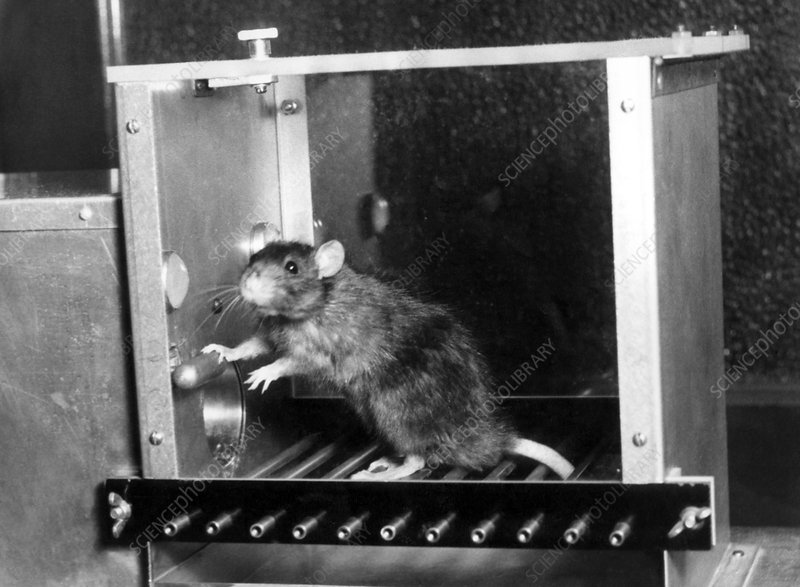 Rat in a Skinner box