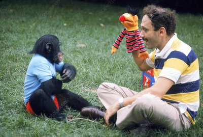 Herbert Terrace with Nim the chimpanzee