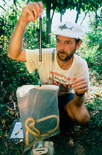 Researcher weighs brown tree snake on Guam Island