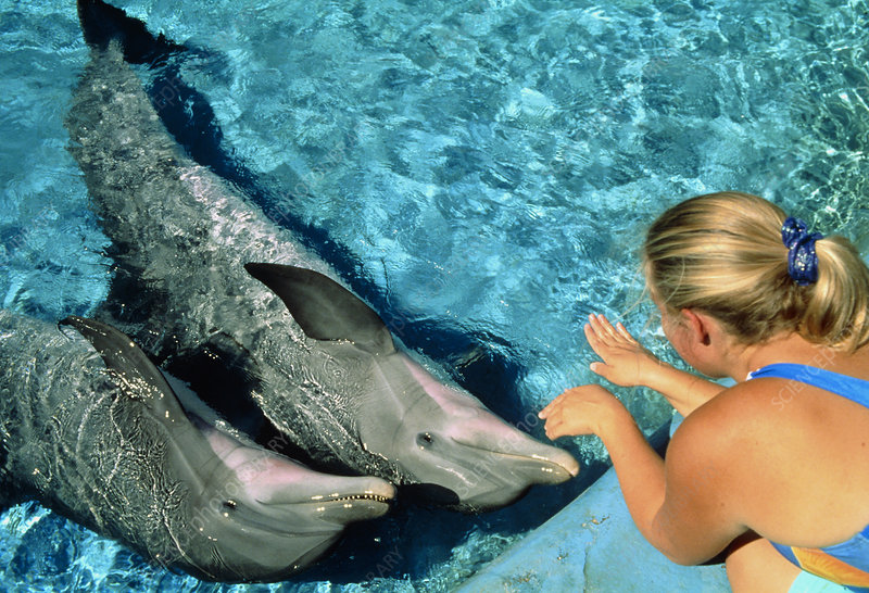 Researcher uses hands to communicate with dolphins