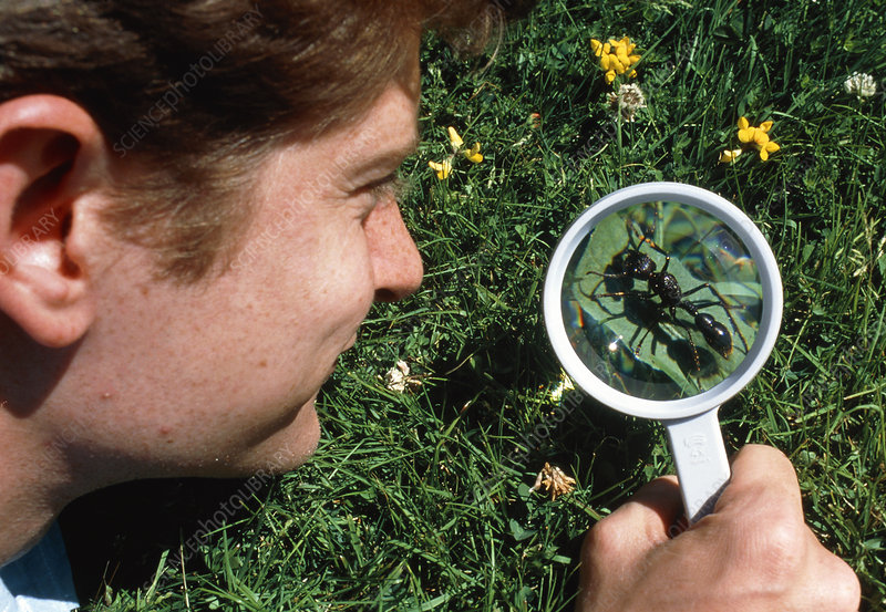 Biologist studying ant through magnifying glass